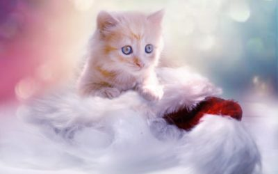 kitten_grey_heart_cat_christmas_pet_young_cat_winter-1172087.jpg!d